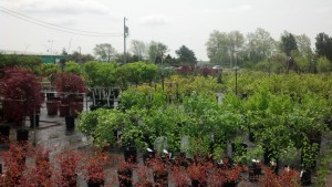 Cox's Plant Farm has a huge nursery with all sorts of trees, bushes, shrubs and other plants for your yard.
