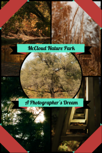 McCloud Nature Park (1)