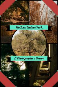 McCloud Nature Park (1)