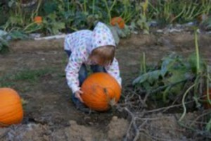 kids who attend Harvest Days get to select a free pumpkin!