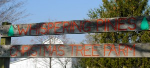 You can find the perfect tree -- and more -- at Evans Whispering Pines Christmas Tree Farm just west of Danville.