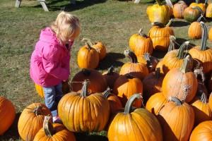 Choosing a pumpkin at the Heartland Apple Festival.