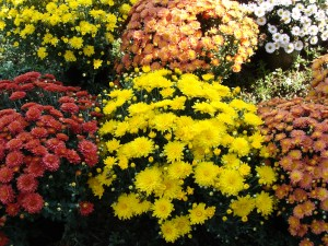 Fall Flowers at Beasley's.