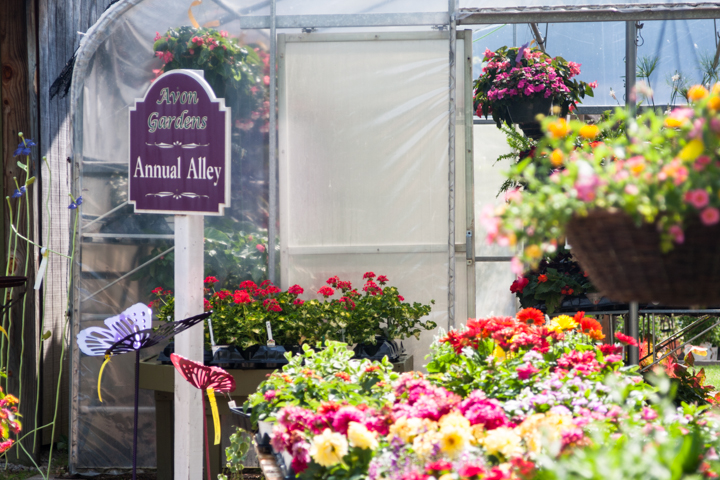 If annuals are what you're after, you'll find plants and flowers in every shade of the rainbow here.