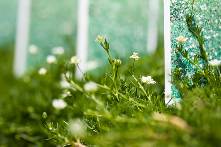 From what I've seen at garden shops around Hendricks County, miniature gardens are growing in popularity. Avon Gardens has a great selection of delicate, small flowers and greenery that will be perfect for your own miniature landscape.
