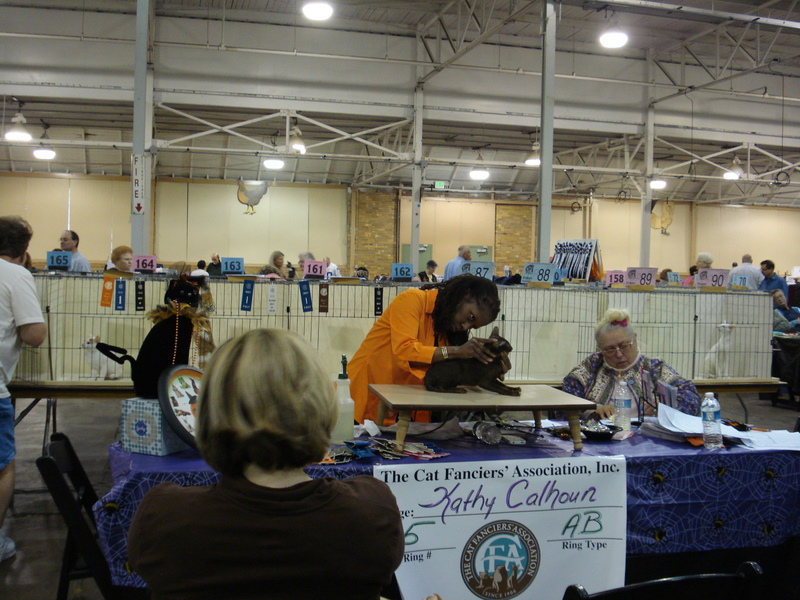 Indy Cat Club Cat Show, Plainfield, Indiana