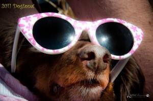 More fun at Dogtona Dog Show