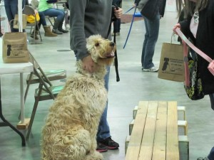 """This dog (Max) is getting ready to """"walk the plank."""""""