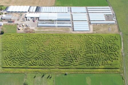 Corn Maze Aerial Shot