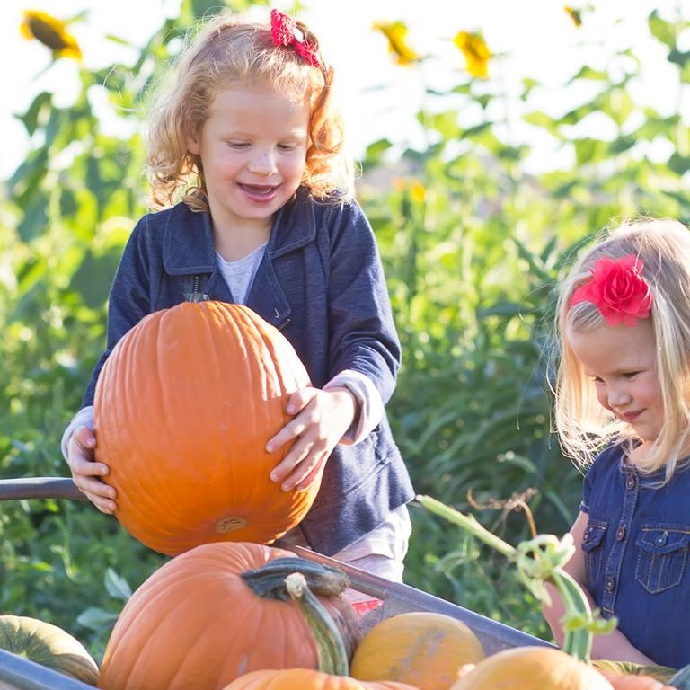 Girls playing with pumpkins