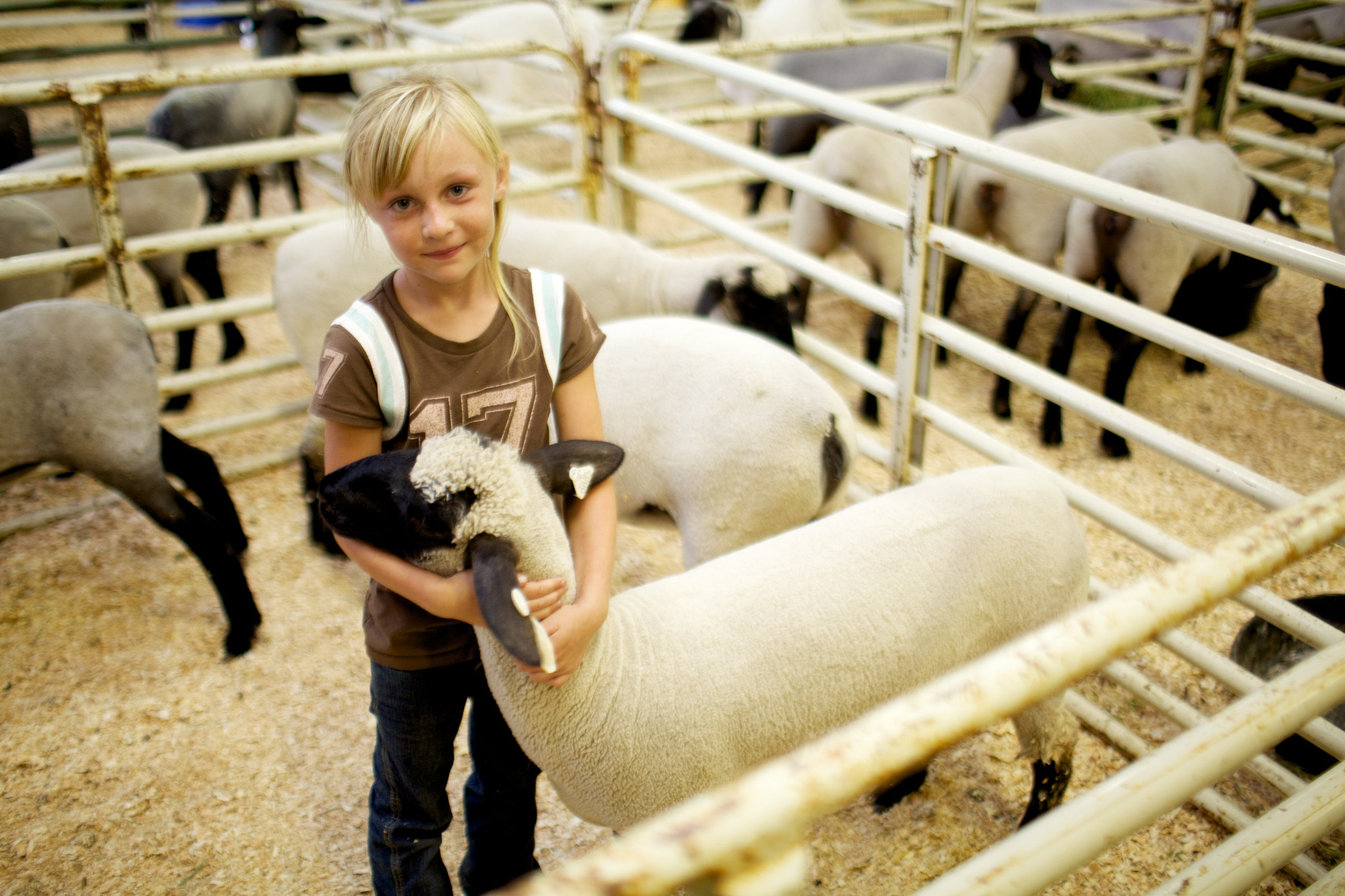 Child petting a sheep