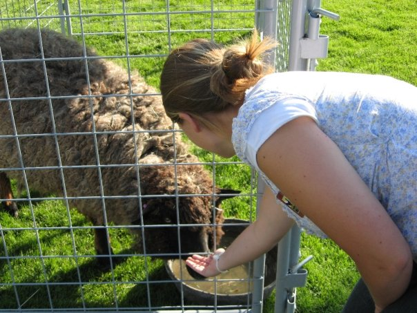 A girl is feeding a lamb