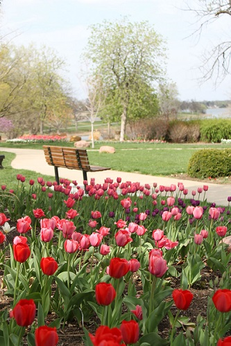 2014 Tulip Time at Lake Shawnee