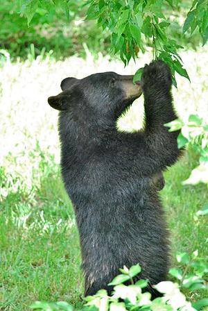 Cub at the Topeka Zoo
