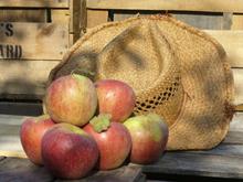 Reids Orchard-220