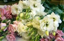 Flowers-226