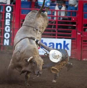 Eugene-Pro-Rodeo-Bull-by-Je