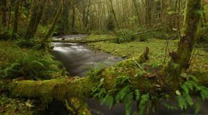 Rock Creek Wilderness