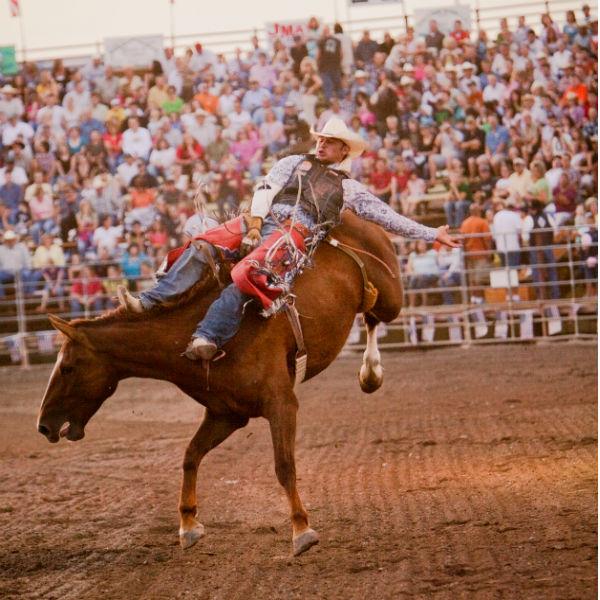 Champion Challenge Rodeo