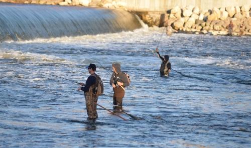 Copy of Grand River fall fishing 1