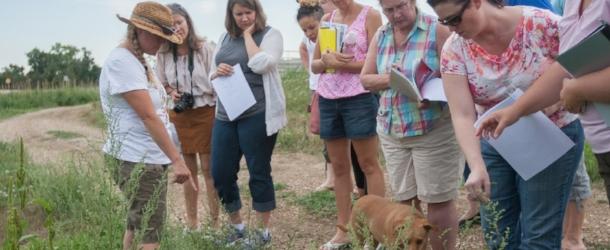 Three Leaf Farm Workshop
