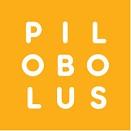 pilobolus