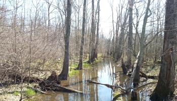 Birding - Beanblossom Creek