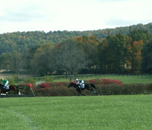 Virginia Gold Cup Races
