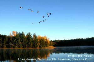 Geese over Lake Joanis by Bob Mosier