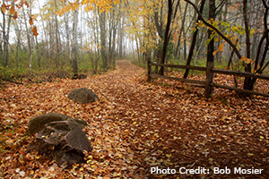 Fall trail in Stevens Point Area