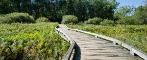 STP-sedge-meadow-trail.jpg