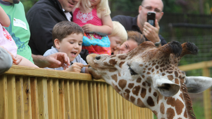 Cross 'feed a giraffe' off your bucket list at Elmwood Park Zoo.