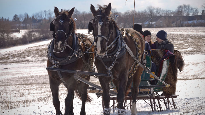 Sleigh Rides at Northern Star Farm are an ideal way to experience Montgomery County after a snowfall.