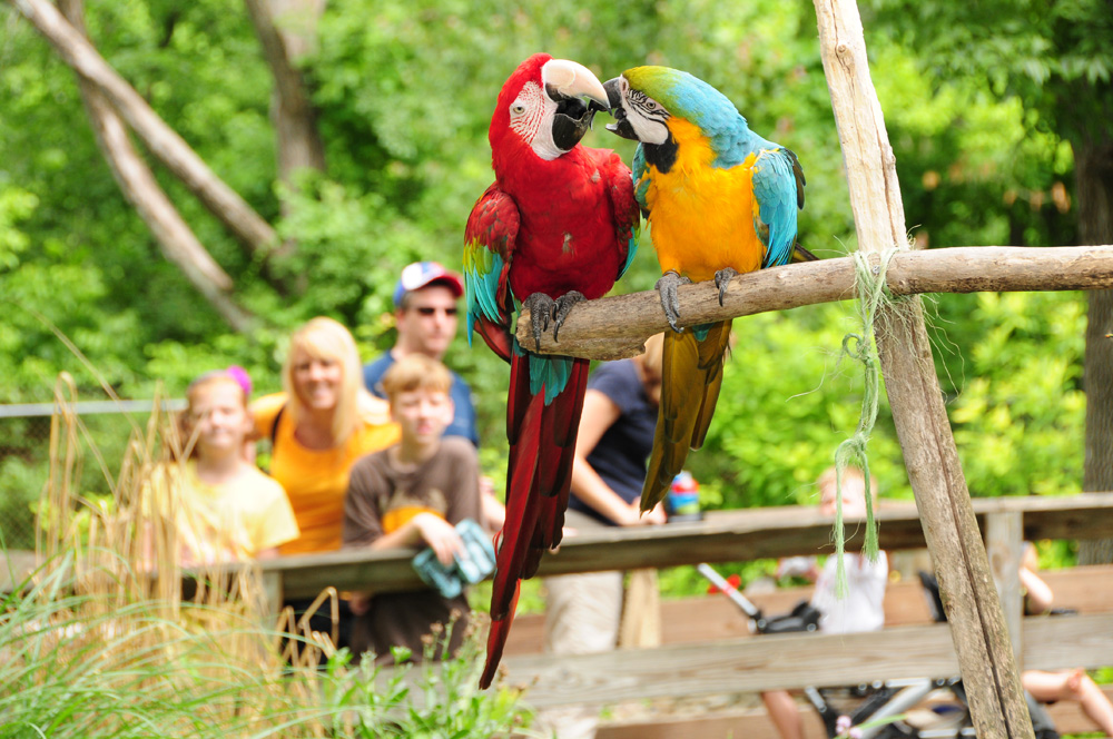 Elmwood Park Zoo's Birds of Paradise exhibit is back this summer