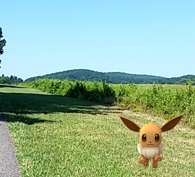 Catch Eevee Enjoying the Views at Valley Forge Park