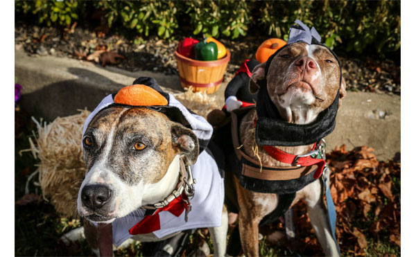 the most adorable octoberfest yet comes to upper merion farmers market