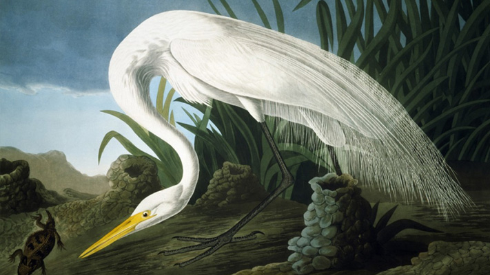 The Berman Museum of Art is hosting an exhibit of John James Audubon's artwork.