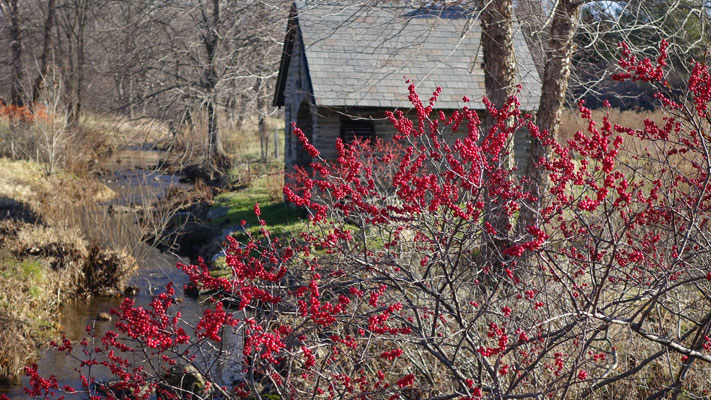 The Morris Arboretum's Winter Wellness Walks return starting Saturday morning.