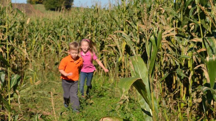 The kids loved running among the cornstalks.