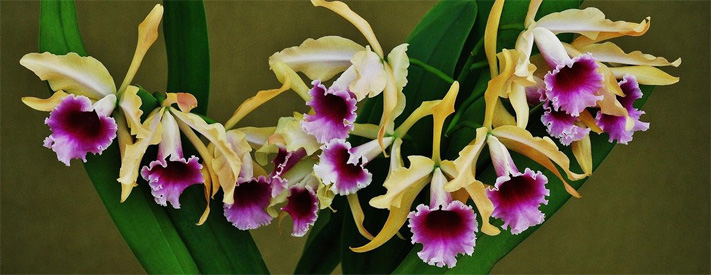 One of nature's most beautiful creations will be on display this weekend's International Orchid Show and Sale