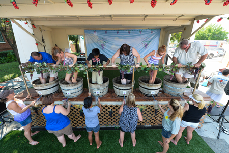 Grapestomp is a must-see at GrapeFest