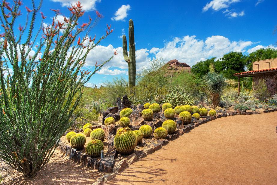 Etonnant Desert Botanical Garden