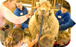 Shear Fun
