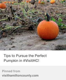Pumpkin blog pinterest