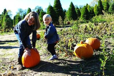 Stonycreek Pumpkin harvest fest
