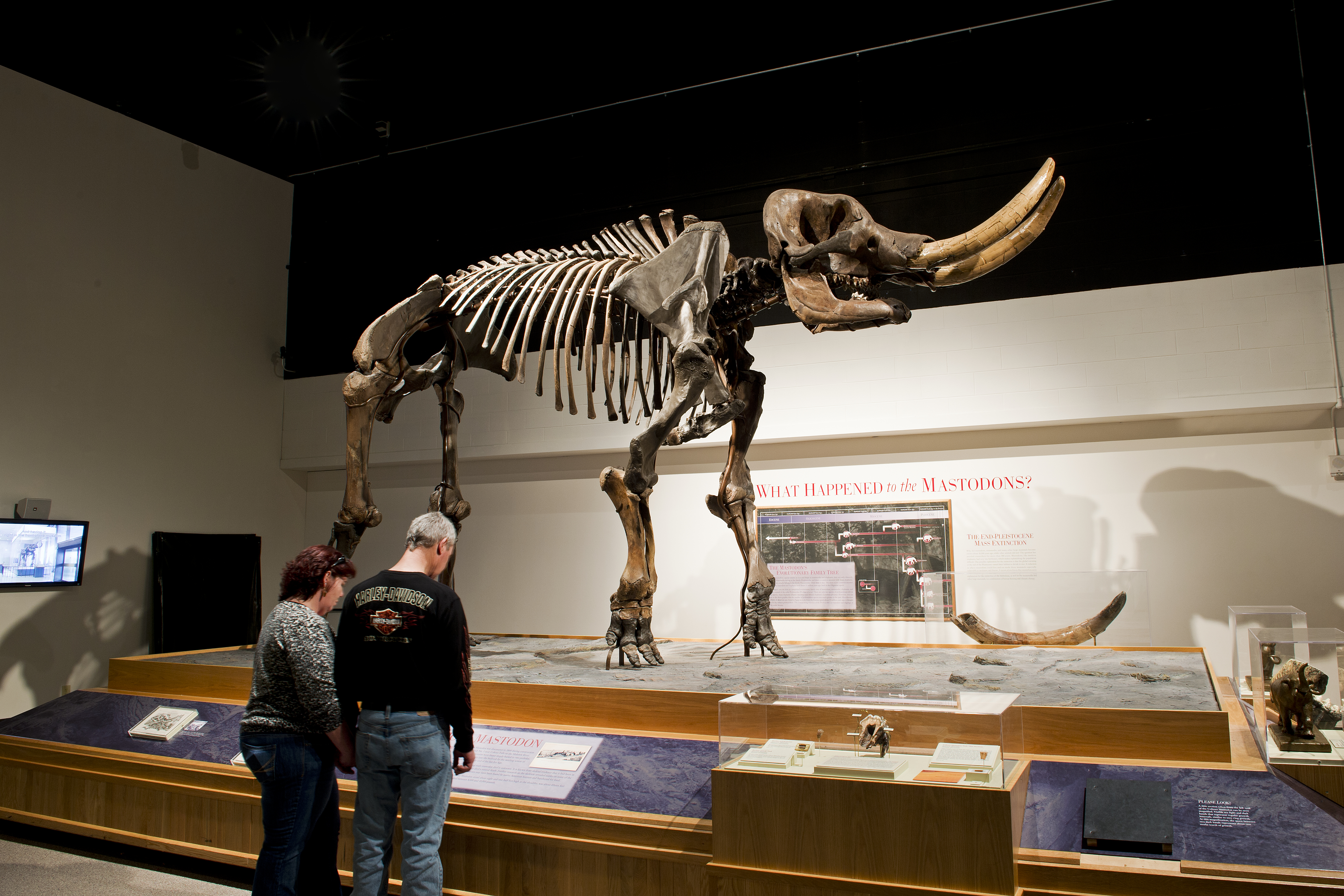 At NYS Museum exhibit