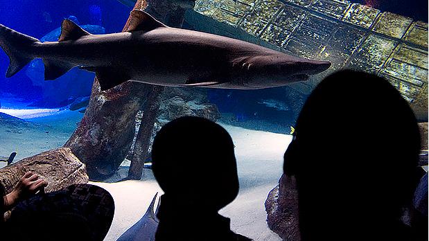 Atlantis Marine World Aquarium - Photo by NYS ESD