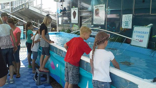 NYS Fair - Stingrays Exhibit