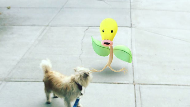 Stockade in Schenectady - Pokemon