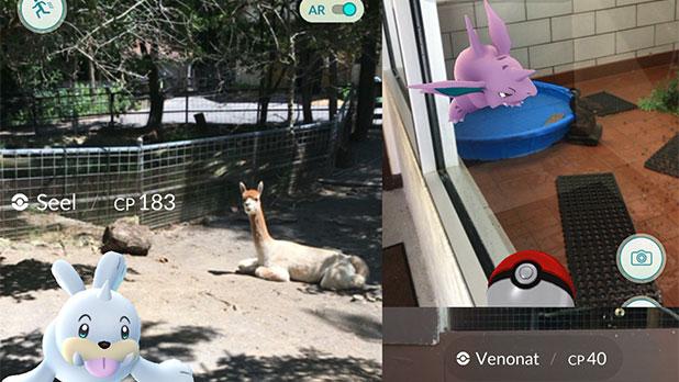 Utica Zoo - Pokemon